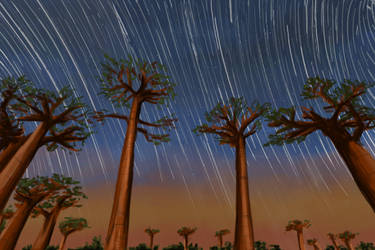 Practice: Baobab with starry skies by SXerosere