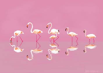 Flamingo practice by SXerosere