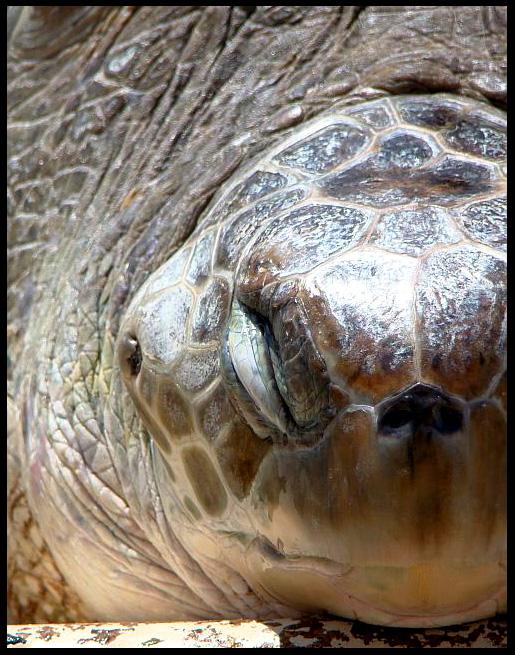 Half Turtle by Death-Soldier101