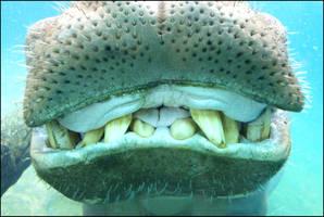 Dentist by Death-Soldier101