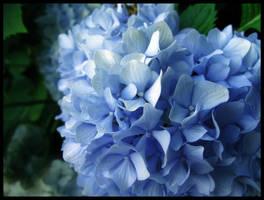 Flowery Blue Bush by TheJenjineer