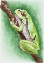Treefrog by imclod