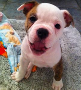 ChexMex-Adopts's Profile Picture