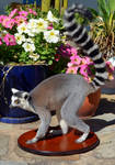 Ring-Tailed Lemur Taxidermy