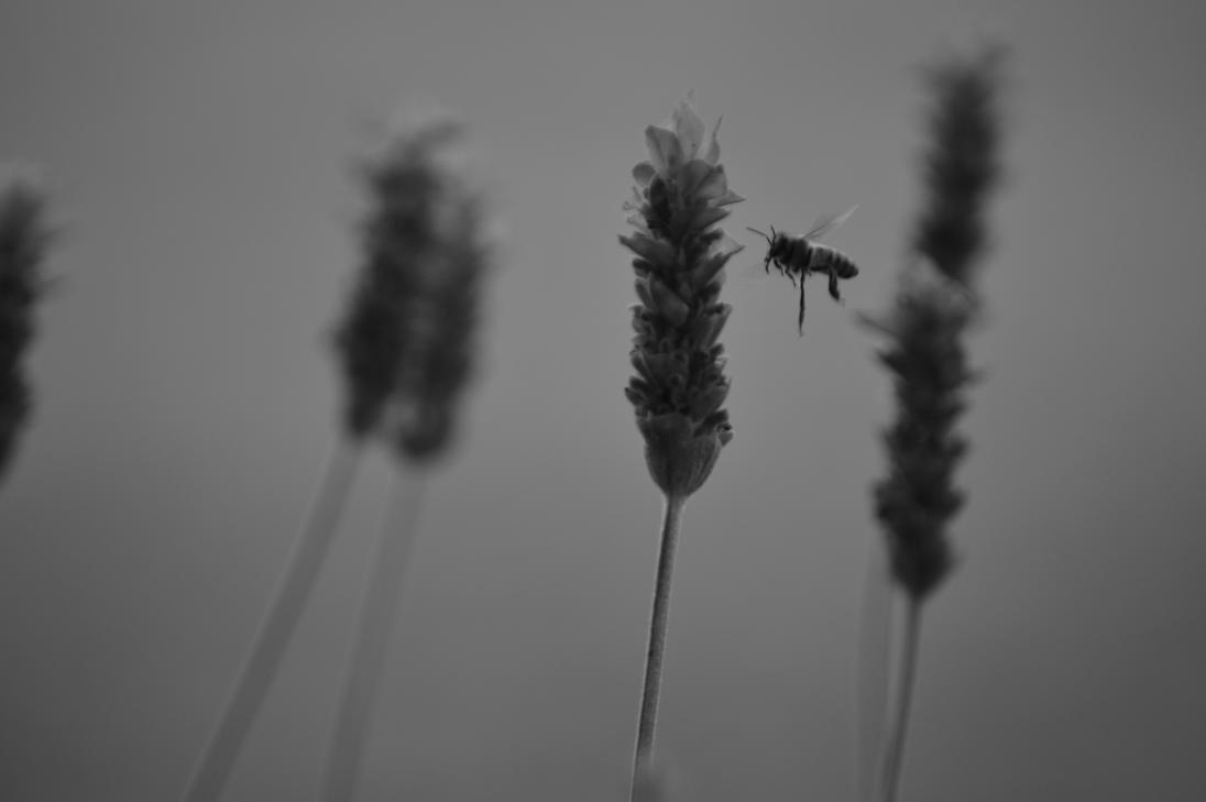 bzz by celiaa26