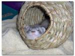 Ferret Basket