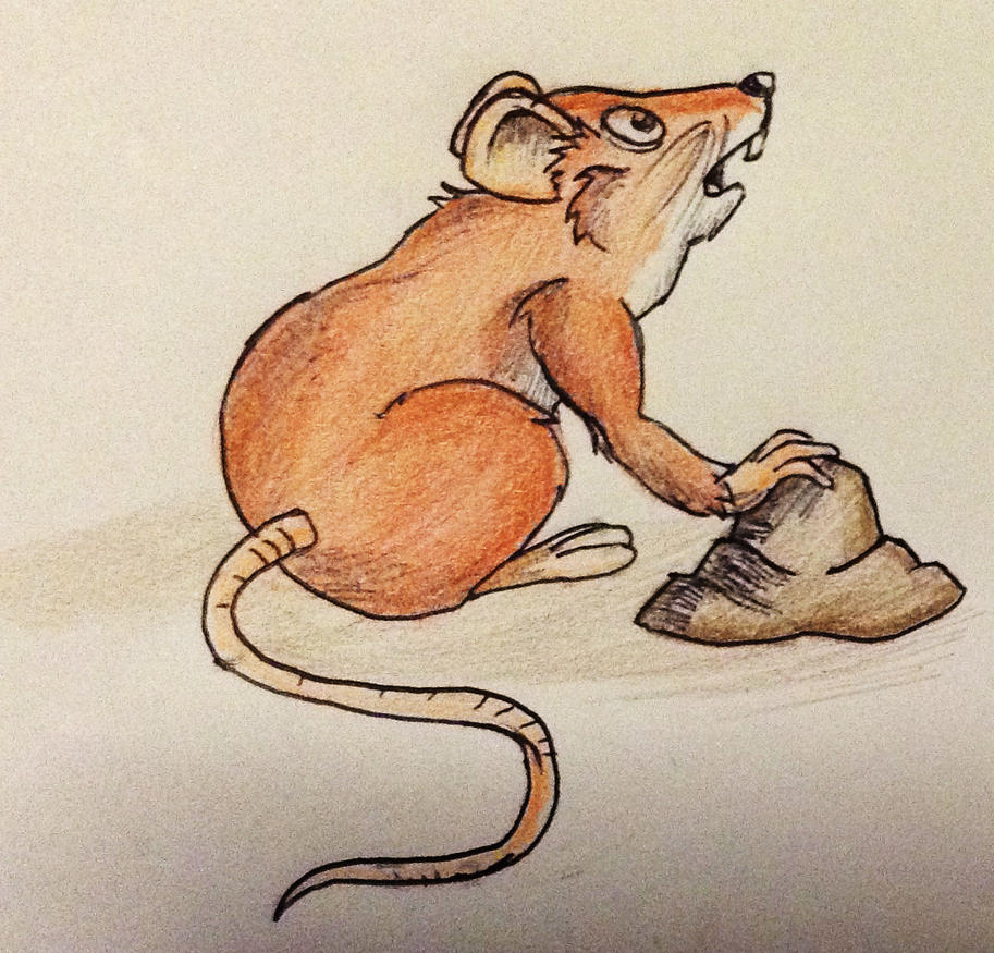 coloured field mouse cartoon by novum semita on deviantart