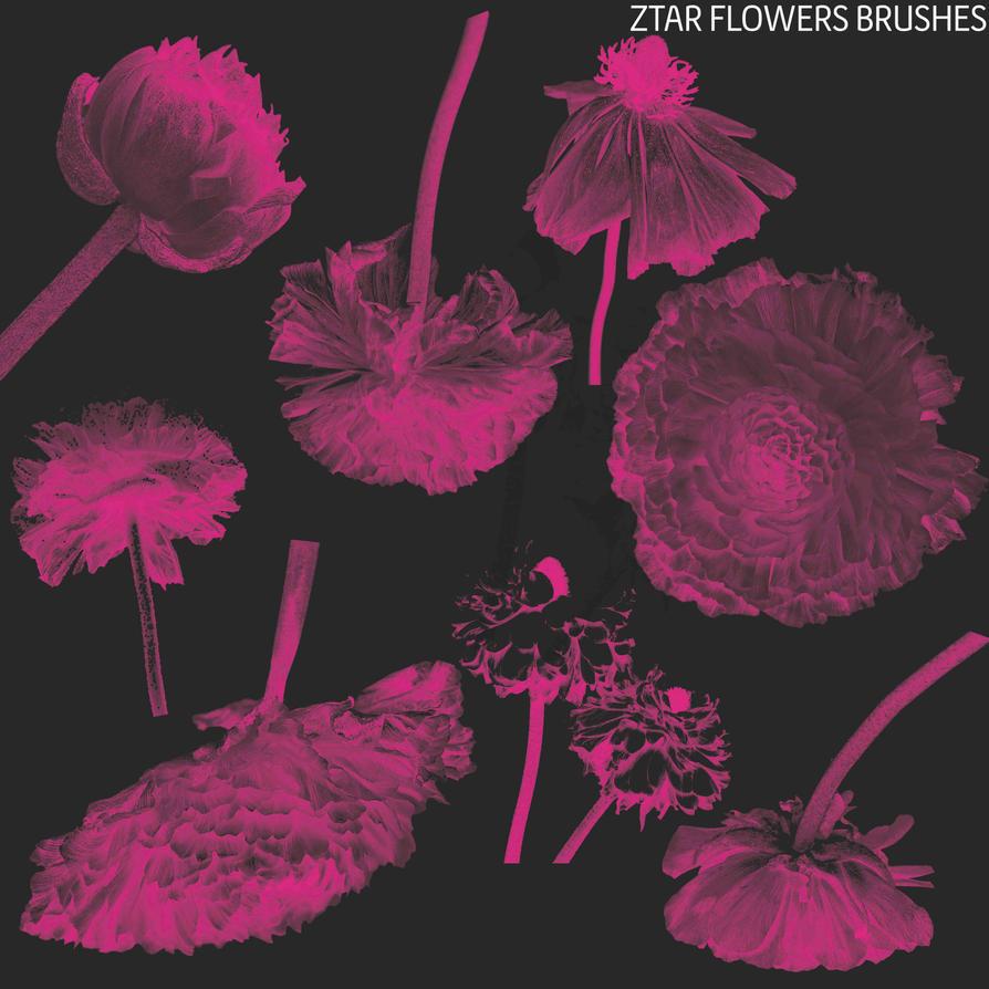 Ztar-Flowers-Brushes by byztar