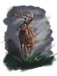 White Tail Buck Portrait by Belote-Art