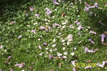Flowers by Kartai