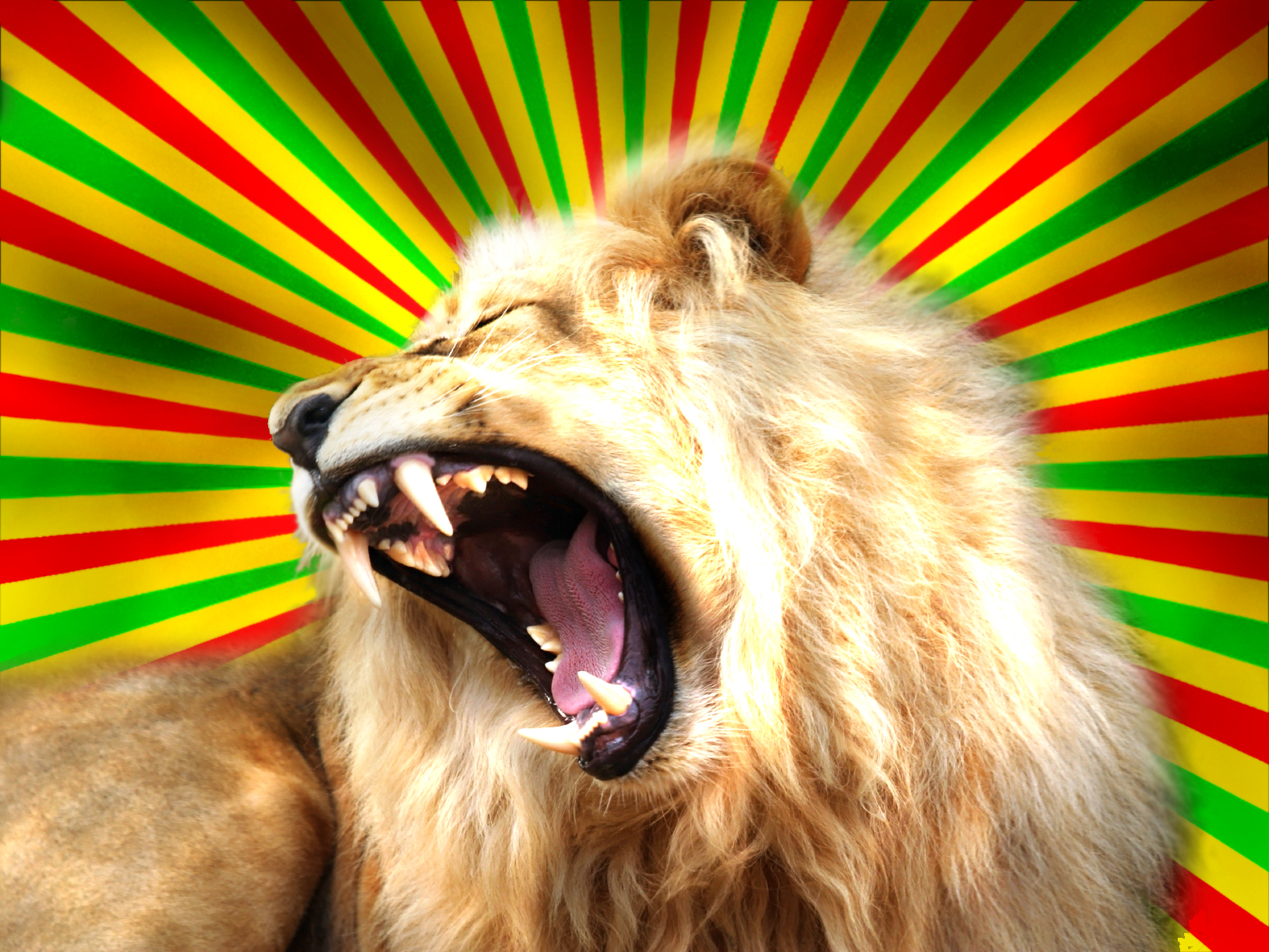 undefined Rasta Lion Wallpapers Wallpapers Adorable