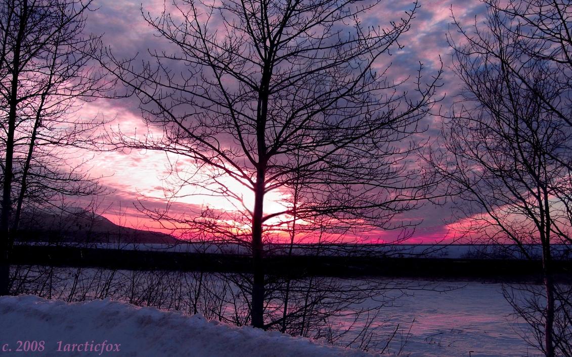 AWE INSPIRING ARCTIC SUNSET by 1arcticfox