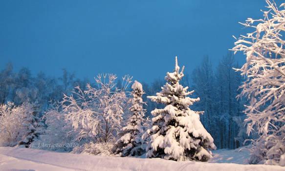 WHITE ALASKA NIGHTS