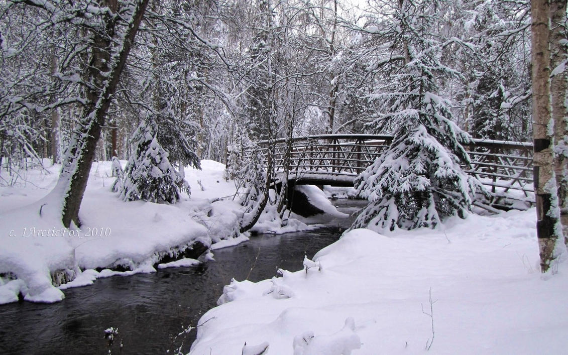Deep woods christmas by arcticfox on deviantart