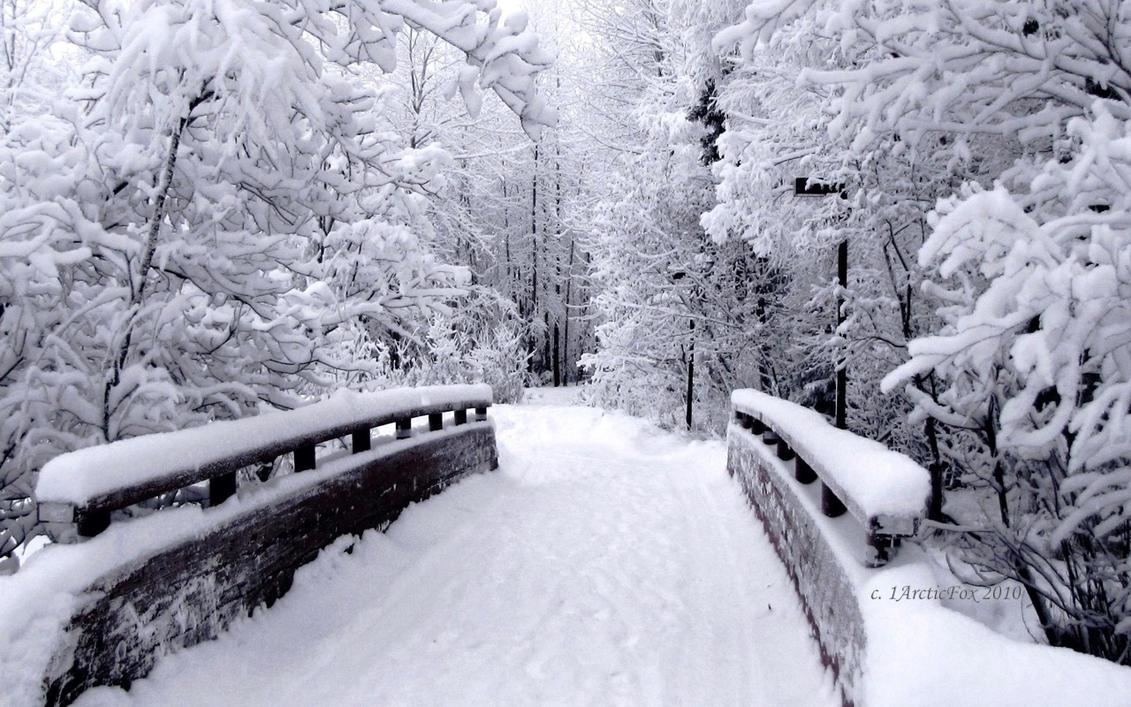 BRIDGE TO NARNIA By 1arcticfox On DeviantArt