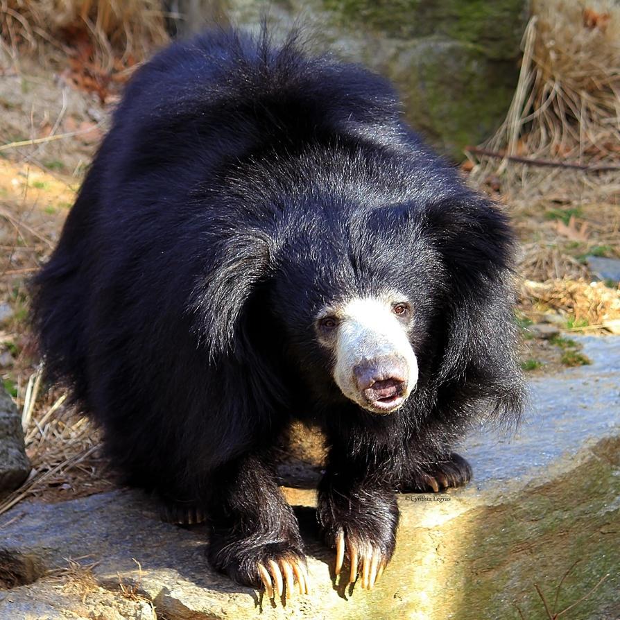 a sloth of bears