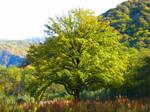 Tree Original