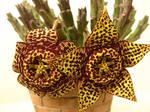 Cactus's flower 4