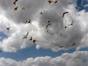 Bird on sky 2