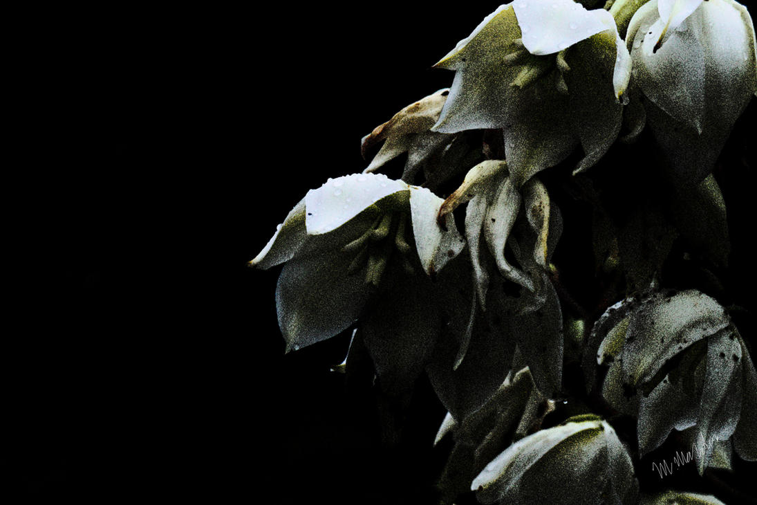 German Flower 11a by moratorian