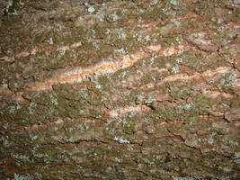Bark Texture 03 by Lengels-Stock