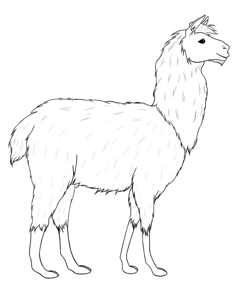 Line Drawing Llama : Llama lineart by morgensterna on deviantart