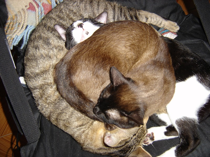 Cat Sleep II by andreiagil