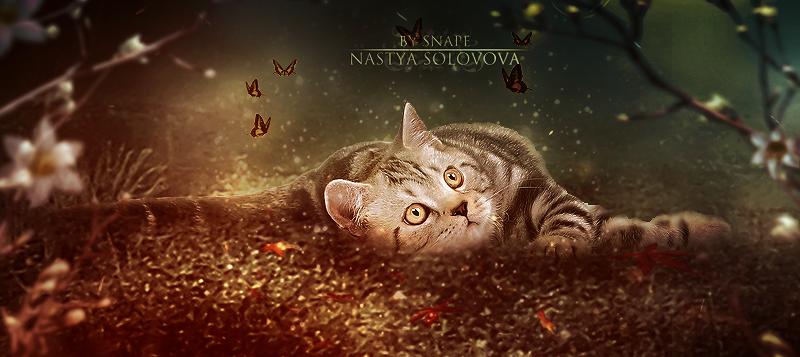 Cat by NastyaSolovova