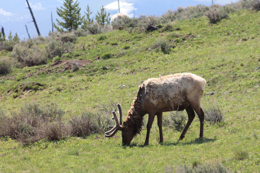 Elk by Fiercesoul
