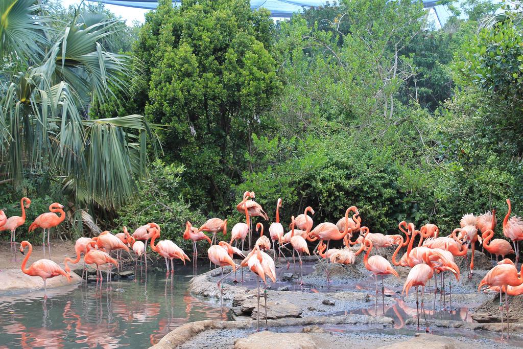 Flamingos by Fiercesoul