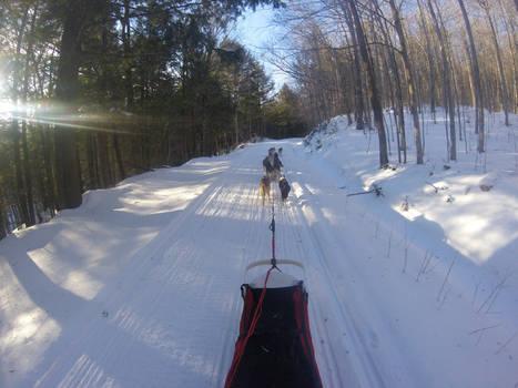 Sled Dog Run 3/21