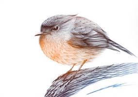 ::: Nur Robin ::: by NurRayArt