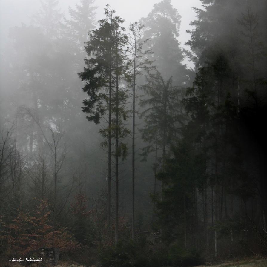 nebelwald by scheinbar