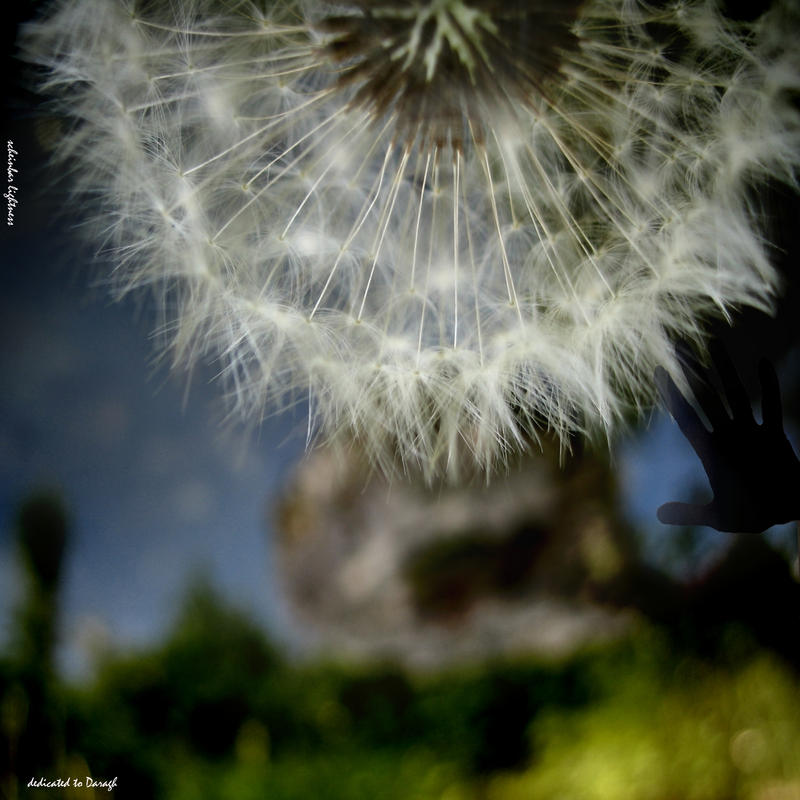 lightness by scheinbar