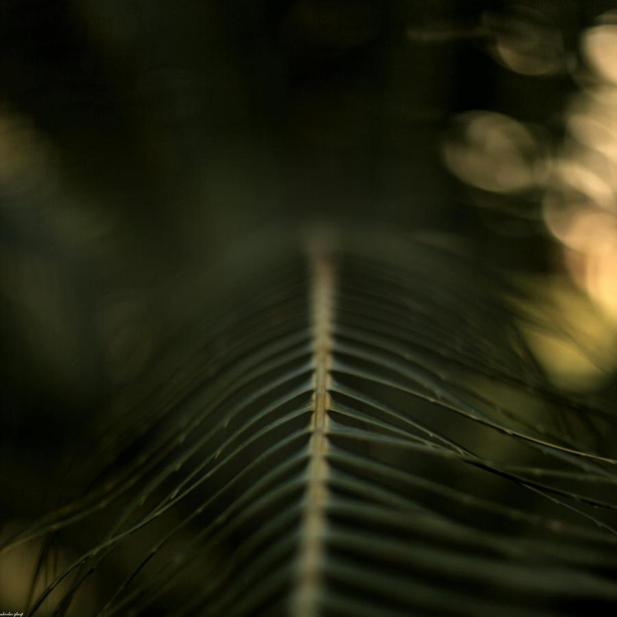 bent by life by scheinbar