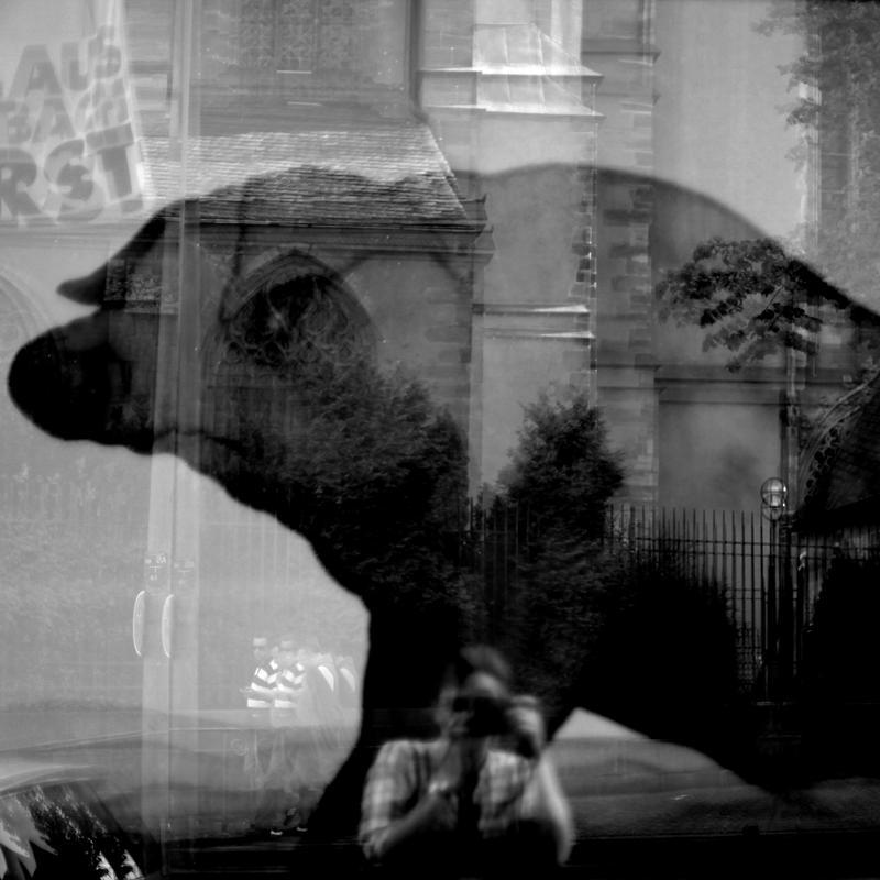 Schwein gehabt by scheinbar