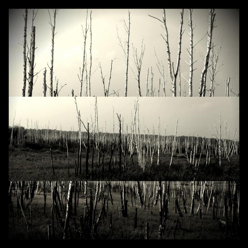 birkens tod by scheinbar
