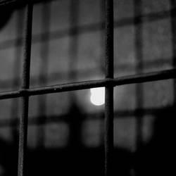 in cage by scheinbar