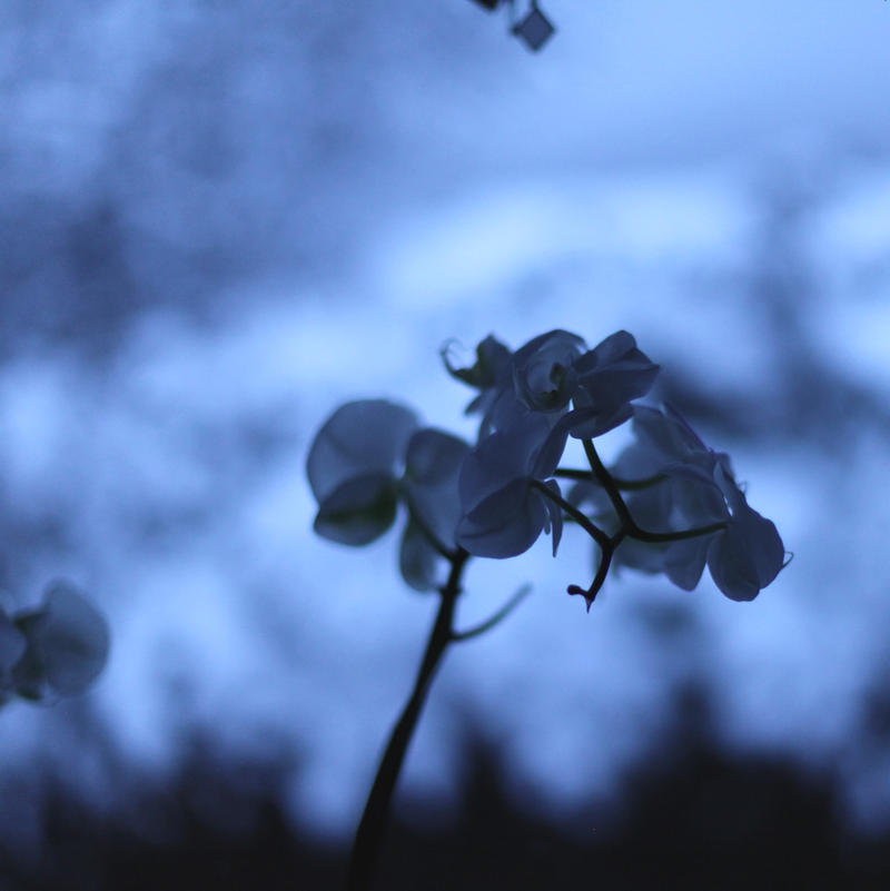 nights in white satin by scheinbar