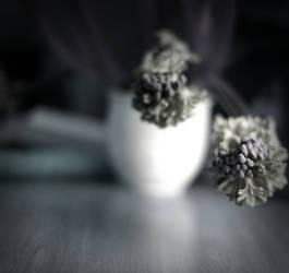 Hyacinthe by scheinbar