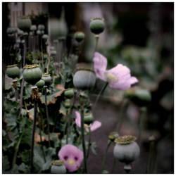 pink and green photo by scheinbar
