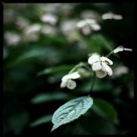 Flower by scheinbar
