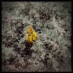 Wuestenblumen4