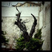 Dragon by scheinbar