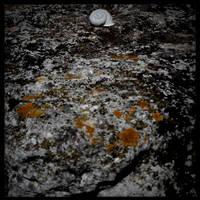 Snailwalk by scheinbar