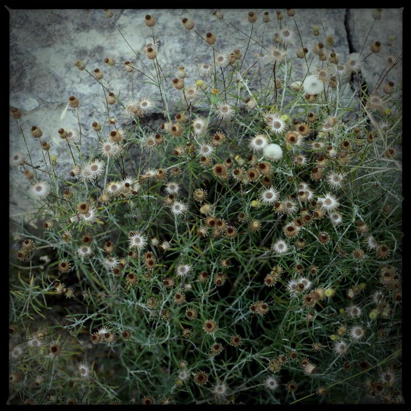 A Month of Flowers 1 by scheinbar