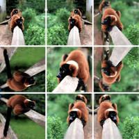 kleine Pandas by scheinbar