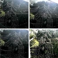 Spider's Net by scheinbar