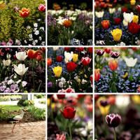 one day in my life beim Tulpenbeet by scheinbar