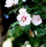 Flowerwhite